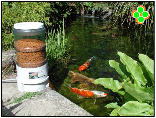 Alimentador autom tico para peces for Peces para limpiar estanques